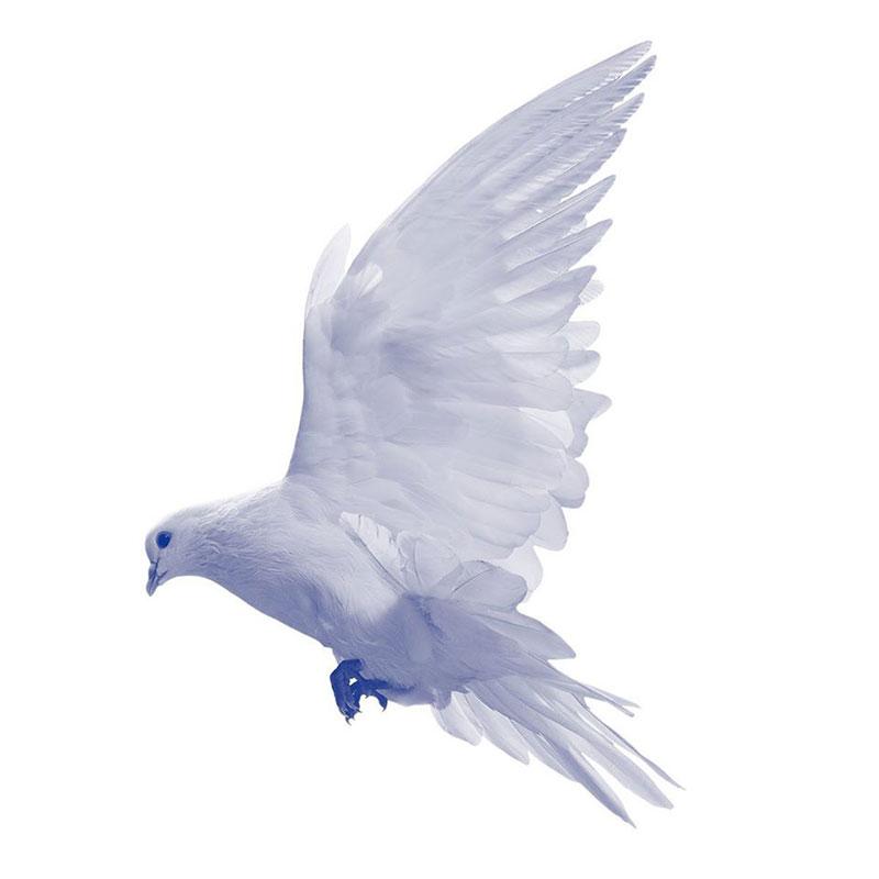 75jaarvrijheid-vogel.jpg
